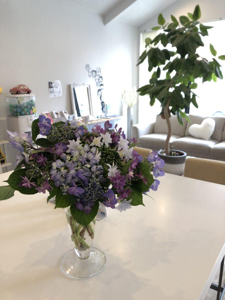 綺麗な紫陽花をいただきました♪